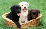 pup gezocht